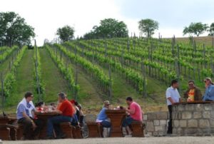 Wine tour to Etyek-Buda