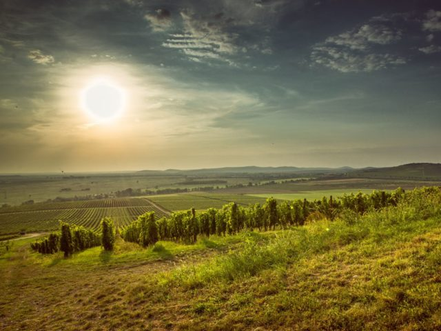 vinområdet Tokaj
